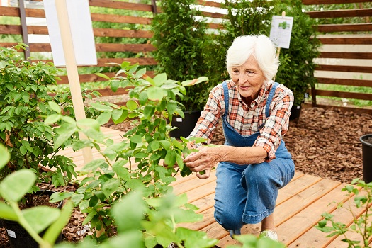 Plants Elderly People Can Easily Care for in a Small Space in Barrie, ON